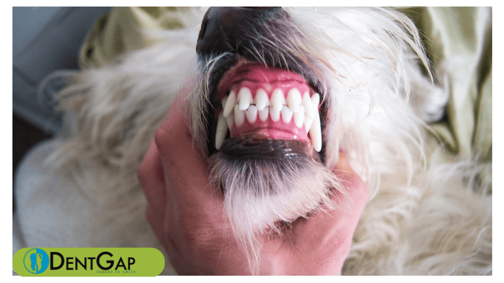 How To Clean Dogs Teeth Video